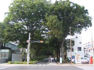 信号のない交差点。どっちが優先ですか?道幅が同 …